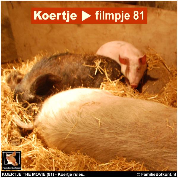 KOERTJE THE MOVIE (81) - Koertje rules...