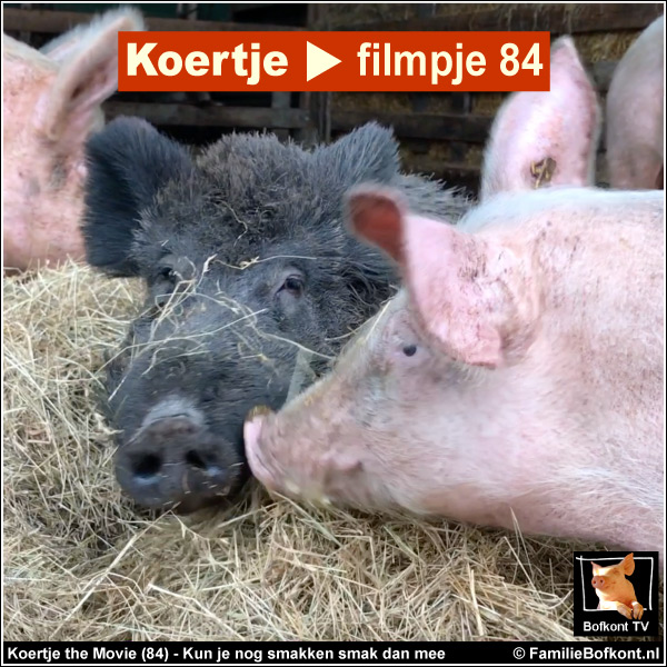 Koertje the Movie (84) - Kun je nog smakken smak dan mee - Koertje en Juffrouw Loes