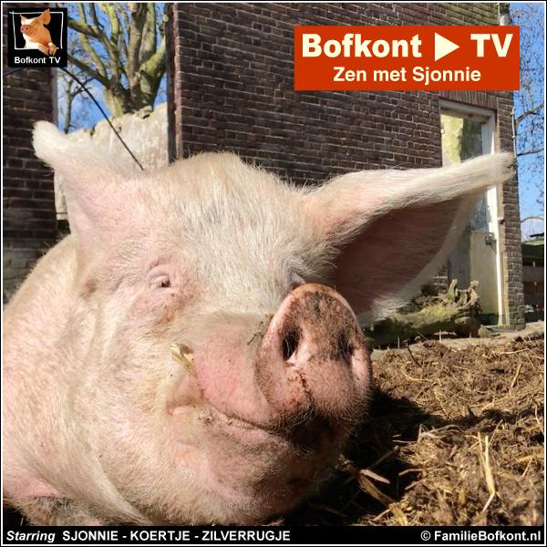 Bofkont TV - Zen met Sjonnie - Starring SJONNIE - KOERTJE - ZILVERRUGJE