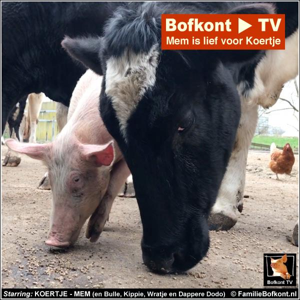Bofkont TV - Mem is lief voor Koertje - Starring: KOERTJE - MEM (en Bulle, Kippie, Wratje en Dappere Dodo)