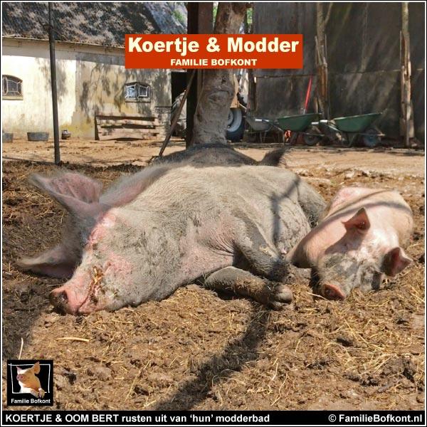 KOERTJE & OOM BERT rusten uit van 'hun' modderbad
