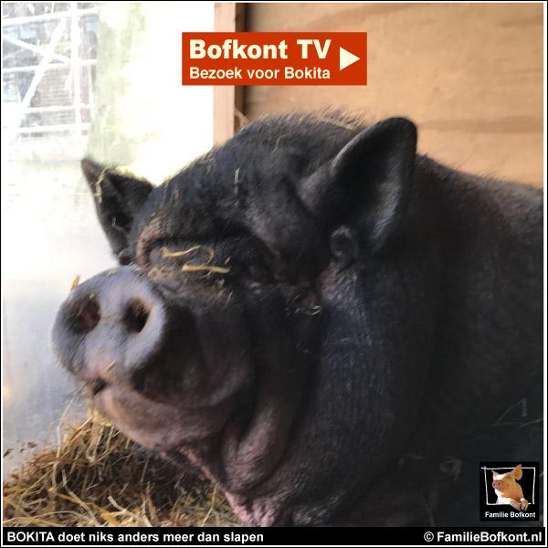 BOKITA doet niets anders meer dan slapen